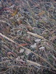 Grassy Matrix